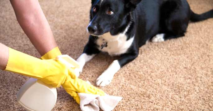 How To Remove Pet Odors And Stains Write For Us Atbuz