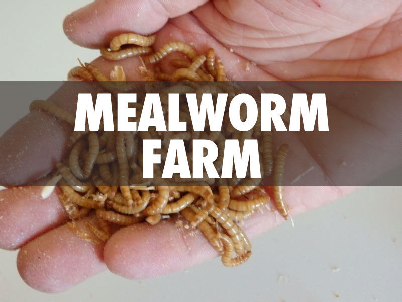 Mealworms Farm. Image via Instructables.com