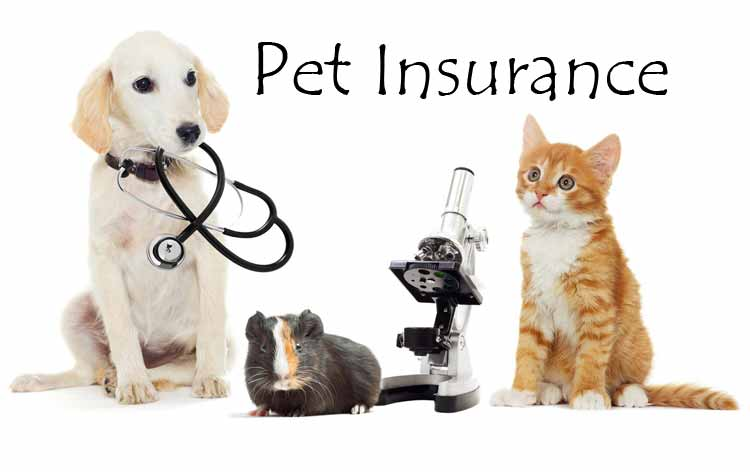 Pet Insurance Cost: Everything You Need to Know | Atbuz