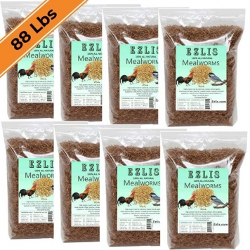 Dried-mealworms-88-lbs-Ezlis